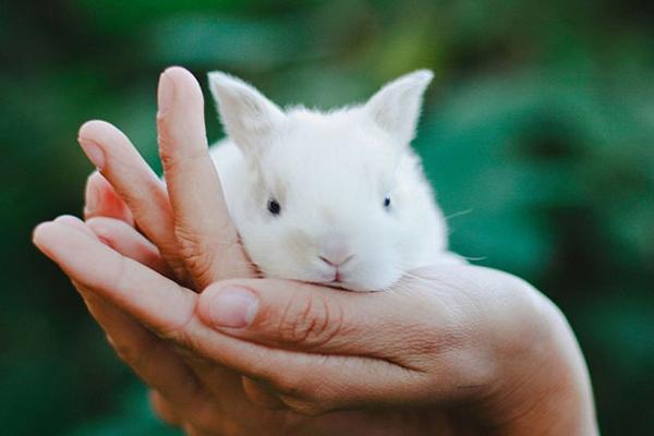 Rüyada Beyaz Tavşan Görmek