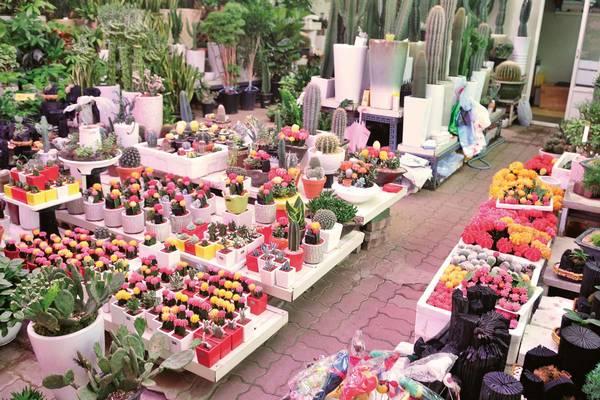 Çiçekçilik nedir?